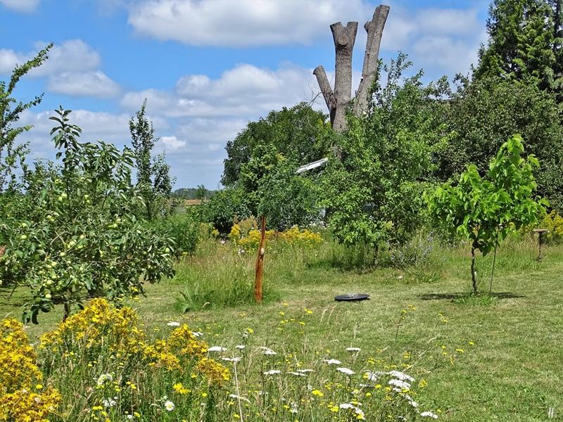 2019-06-28 LüchowSss Garten Wieseninseln mit Eiche im Hintergrund (2)