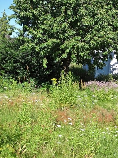 2019-06-28 LüchowSss Garten Wieseninseln (4)