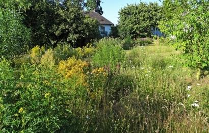 2019-06-29 LüchowSss Garten Wieseninseln (1)