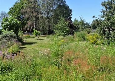 2019-06-29 LüchowSss Garten Wieseninseln (2)