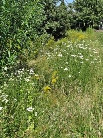2019-06-30 LüchowSss Garten Wieseninseln (2)