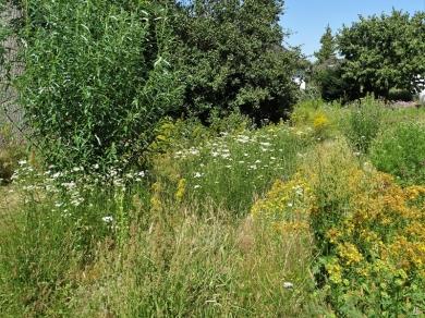 2019-06-30 LüchowSss Garten Wieseninseln (3)