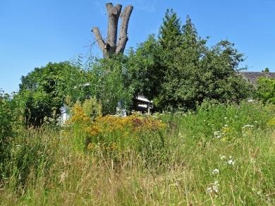 2019-06-30 LüchowSss Garten Wieseninseln (4)