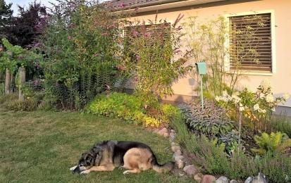 2019-07-29 LüchowSss Garten morgens halb sieben Uhr (18)
