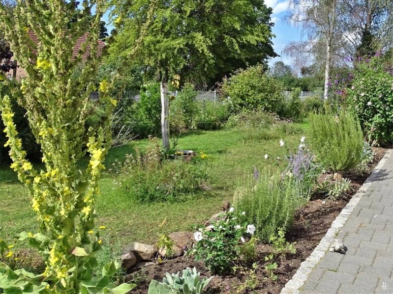 2019-08-11 LüchowSss Garten neues Beet vor der südlichen Hauswand