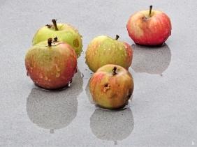 2019-08-15 LüchowSss Garten Äpfel im Regen