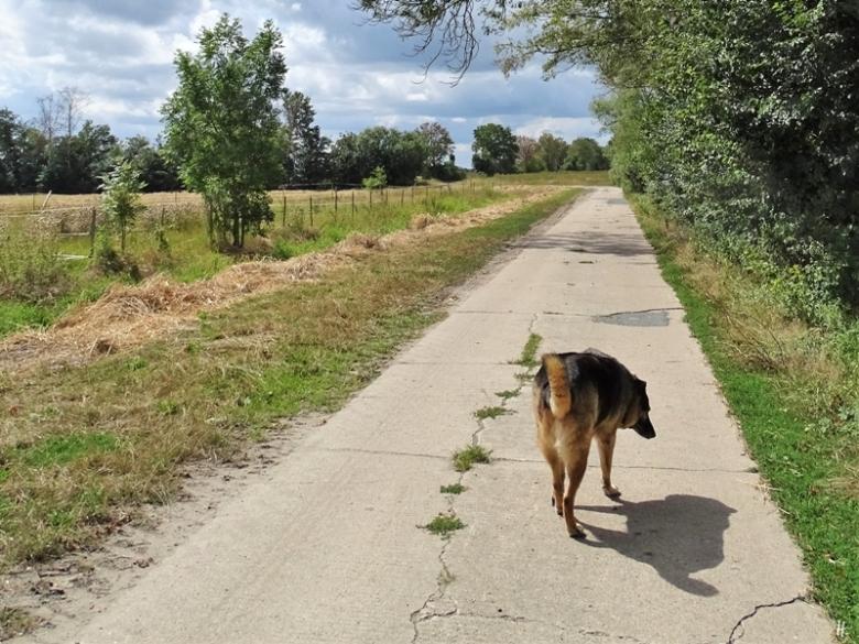 2019-08-16 bei Lüchow - Bongo + sein katzenhafter Schatten (2)