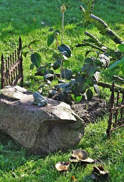 2019-10-02 LüchowSss Garten Burkwood-Schneeball (Viburnum x burkwoodii) (3)