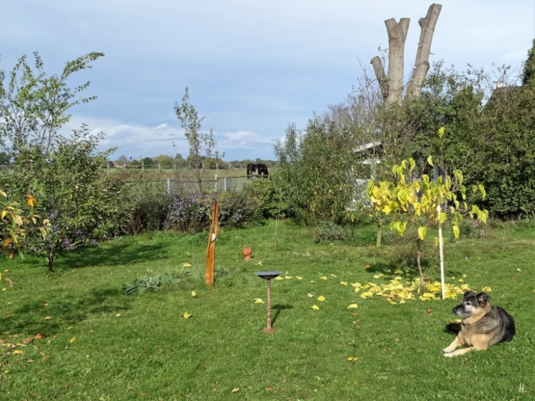 2019-10-18 LüchowSss Garten Bongo (1)