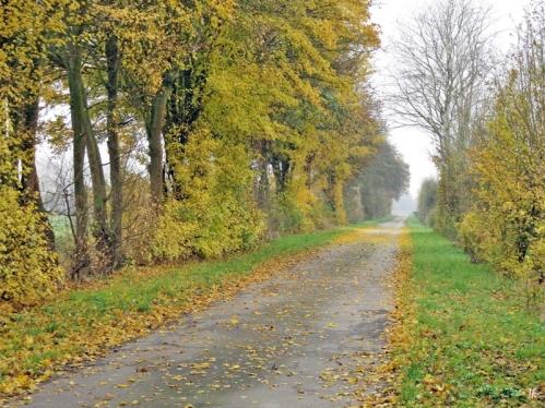 2019-11-17 b. Banneick unterwegs gelbe Feldahornblätter (7)