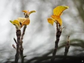 2019-12-08 LüchowSss Garten letzte Blätter vor dem Fenster