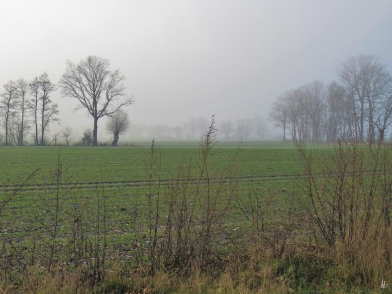 2020-01-01 LüchowSss Neujahrs-Vormittag - der Nebel schluckt das Himmelblau