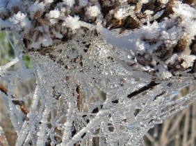 2020-01-02 b. LüchowSss unterwegs (4) Wiesenschafgarbe + Spinnfäden, vereist