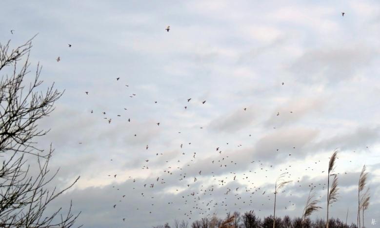 2020-01-31 b Banneick Vögel