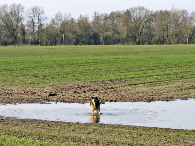 2020-02-08 b. Lüchow 'Rote Scheune' unterwegs Bongo (2) in der Pfütze