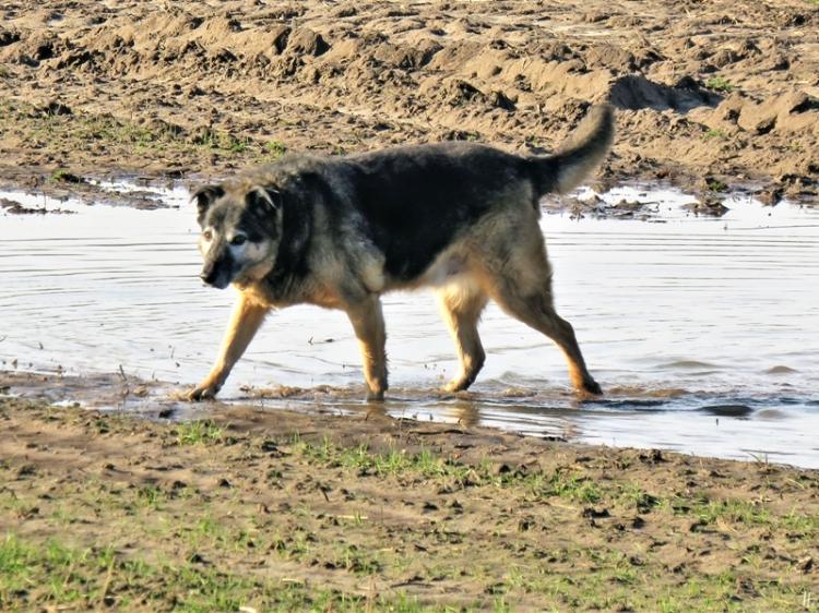 2020-02-08 b. Lüchow 'Rote Scheune' unterwegs Bongo (4) in der Pfütze