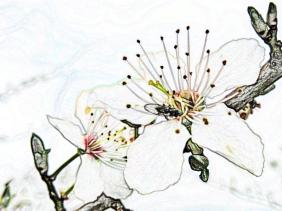 2020-03-01 LüchowSss Garten Kretenblüten mit Fliege (PhotoScapeArt)