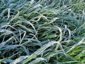 2020-03-14 b. Lüchow morgens unterwegs Gras mit Reif