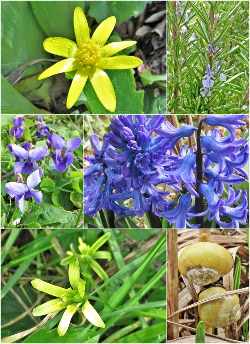 2020-03-18 +19 LüchowSss Garten blau & gelb 1x6 div. Blumen + ein Hain-Bänderschnecken-Paar