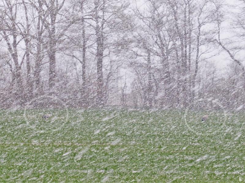 2020-03-30 LüchowSss 8 Uhr morgens Schnee + Kraniche (markiert)