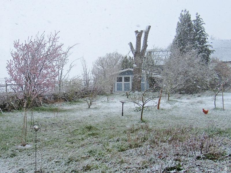 2020-03-30 LüchowSss Garten 12h mittags im Schnee (3)