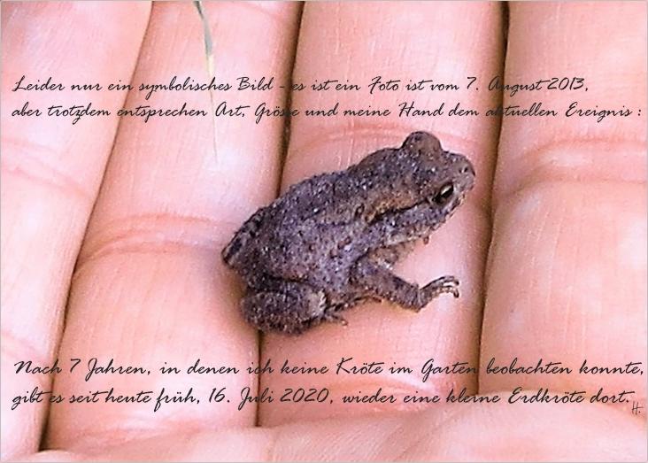 2013-08-07 für 2020-07-16 LüchowSss Garten morgens - junge Erdkröte (Bufo bufo)