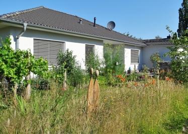 2020-06-26 LüchowSss Garten Braunrote bzw. Bahnwärter-Taglilien (Hemerocallis fulva) in eigener Wieseninsel (1)