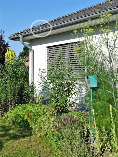 2020-06-27 LüchowSss Garten morgens mit Spatz in der Dachrinne (3)