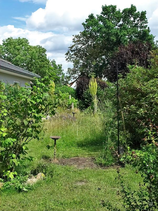 2020-07-07 LüchowSss Garten - ohne die Grüne Rose