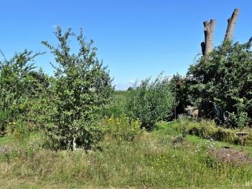 2020-07-30 LüchowSss Garten Wieseninseln (1)
