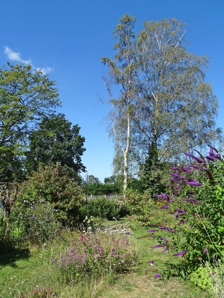 2020-07-30 LüchowSss Garten Wieseninseln (6)