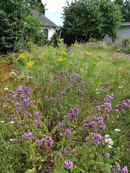 2020-07-31 LüchowSss Garten Wieseninseln (4)