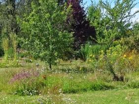 2020-08-01 LüchowSss Garten Wieseninsel mit Wiesen-Flockenblume (rechts vor Rainfarn)