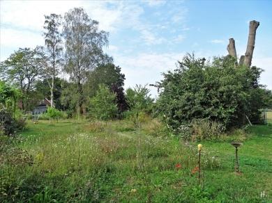 2020-08-15 LüchowSss Garten Wieseninseln (2)