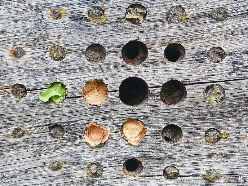 2020-08-23 LüchowSss Garten Insektenhotel Garten-Blattschneiderbienen-Nestverschlüsse