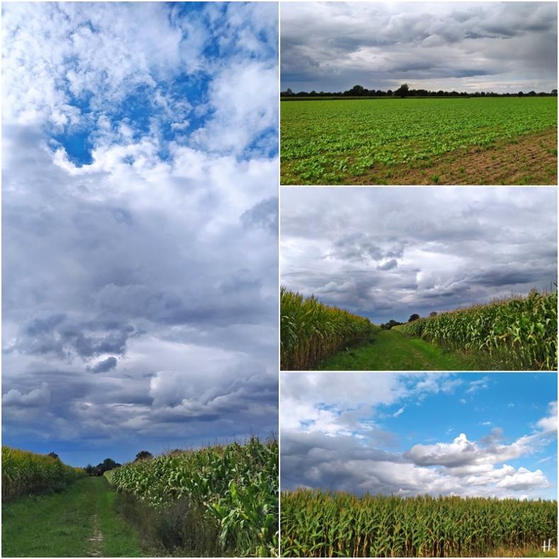 2020-09-06 LüchowSss Spaziergang am Mais entlang (1x4)