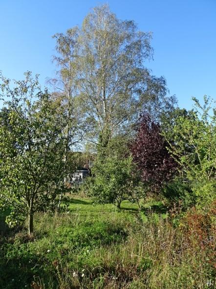 2020-09-21 LüchowSss Garten Wieseninsel + Obstbäume +Birken