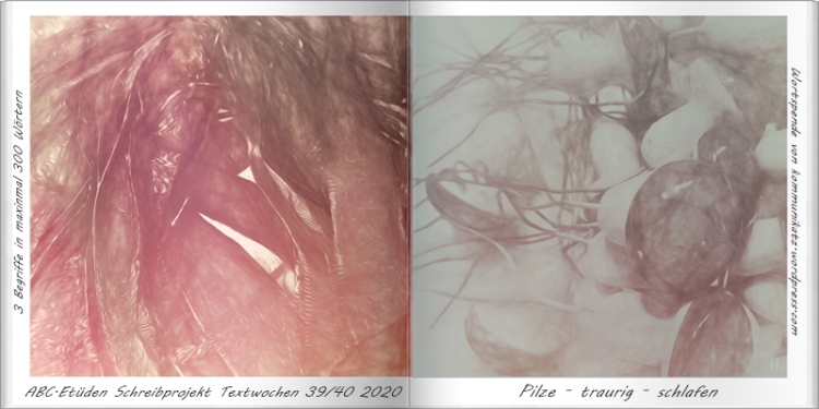 2020-09-25 ABC-Etüden TW 39+40 2020 Wortspende Kommunikatz Pilze-traurig-schlafen -Bilder (2012-01-03)-Buch H