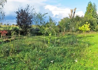 2020-10-10 LüchowSss Garten frisch gepflanzte Rote Maulbeere (Morus rubra) 'Rote Pfälzer'(2a) markiert