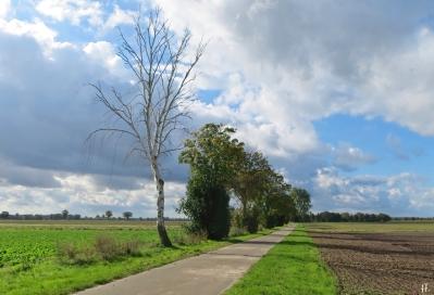 2020-10-10 LüchowSss Spaziergang abgestorbene Birke in der Feldmark