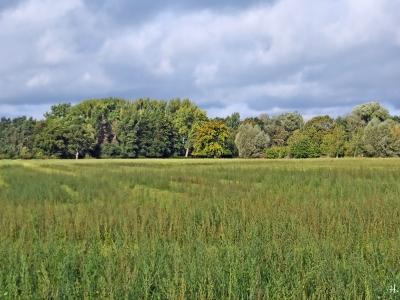 2020-10-11 LüchowSss Feld + Bäume