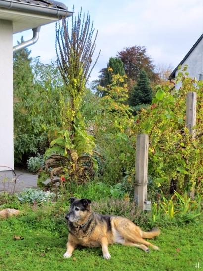 2020-10-19 LüchowSss Garten + Bongo (4)
