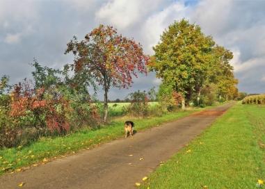 2020-10-24 LüchowSss Feldmark mit Bongo (12) Feldweg nach Lüchow