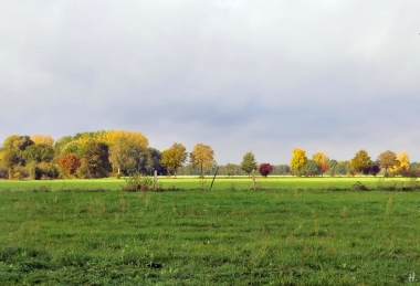 2020-10-24 LüchowSss Feldmark mit Bongo (17) Wiesenblick + bunte Bäume