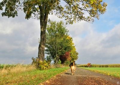 2020-10-24 LüchowSss Feldmark mit Bongo (8) Feldweg nach Lüchow
