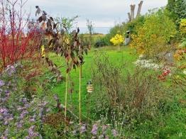2020-10-25 LüchowSss Garten Herbstastern (Symphyotrichum) + bunte Herbstgehölze