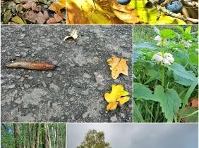 2020-10-29 bei Lüchow Spaziergang (1x6)