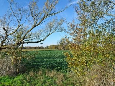 2020-11-15 LüchowSss Spaziergang (1) Blick zwischen Weiden