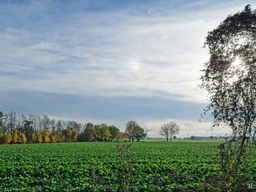 2020-11-15 LüchowSss Spaziergang (6) Halo bzw. 'Sonnenhündchen' links