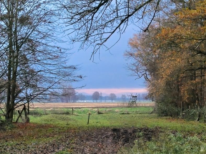 2020-12-07 b.LüchowSss Spaziergang Blick über die Wiese